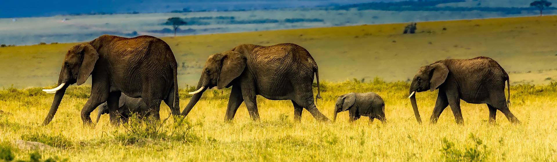 Krugar Safari Park and Cape Town